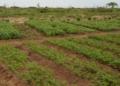 Changement climatique : les recommandations de Météo Bénin aux producteurs