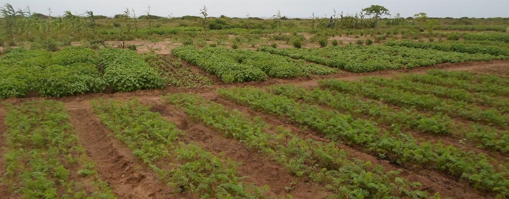 Lancement officiel du Pasafred: Une bouffée d'air pour l'agriculture familiale au Bénin
