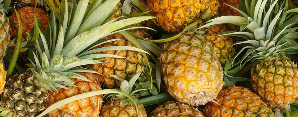 Bénin: Le Brmn au secours des entreprises de transformation d'ananas et de karité