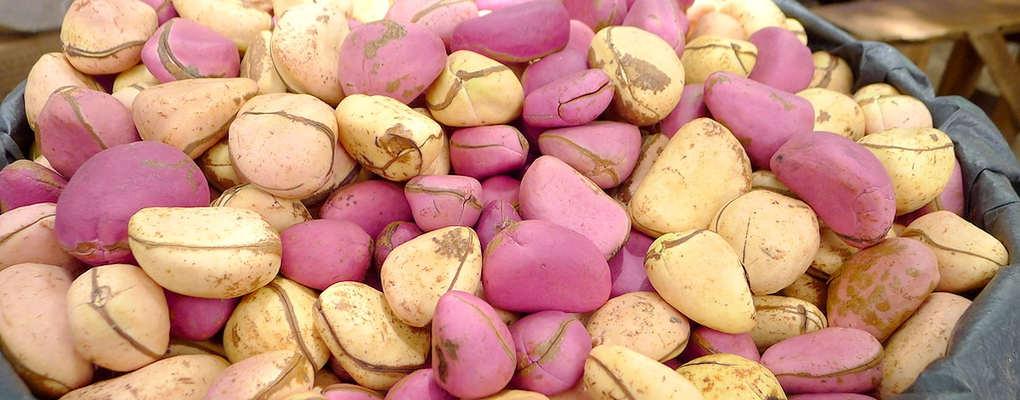 La noix cola et le sel, deux codes de mariage au Bénin