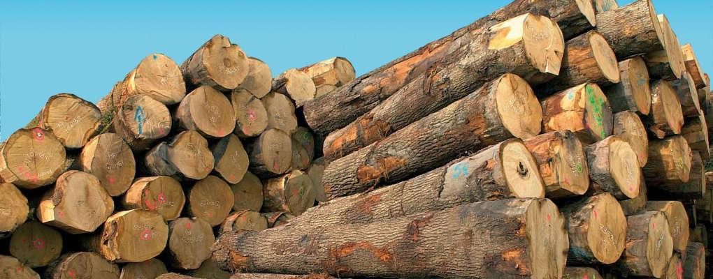 Sénégal : Le trafic de bois à la base de la tuerie en Casamance ?