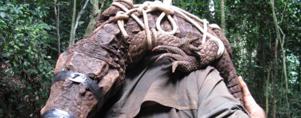 Gabon : découverte d'une nouvelle espèce de crocodiles bloqués dans une grotte depuis 3000 ans
