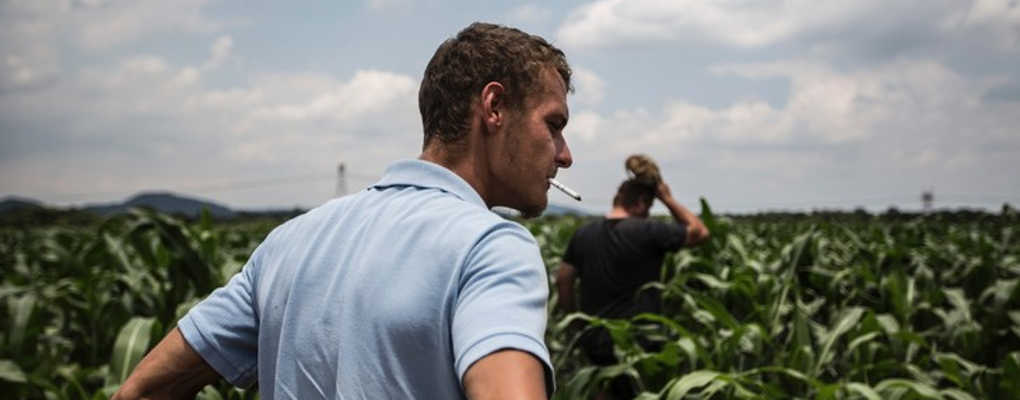 Afrique du sud : la province la plus peuplée va exproprier les fermiers blancs