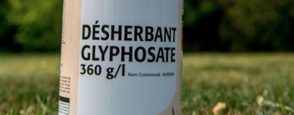 Glyphosate dans la culture cotonnière au Bénin : un danger pour la santé des cultivateurs