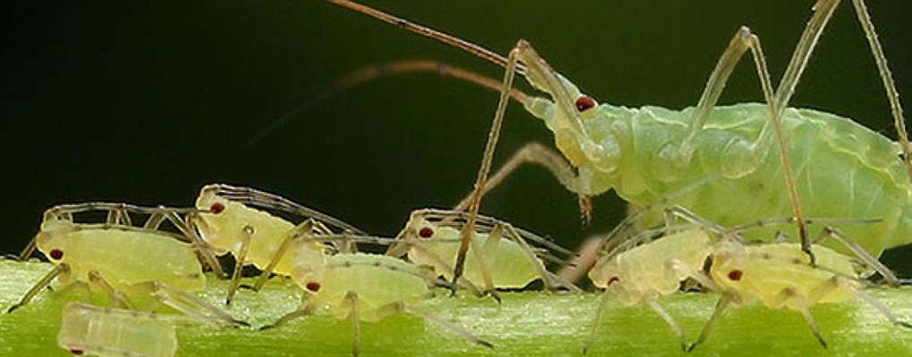 Insectes porteurs de virus : des scientifiques craignent que cela soit utilisé comme arme de guerre