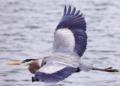 Il y a 6 fois plus d'oiseaux que d'humains dans la nature, selon une étude