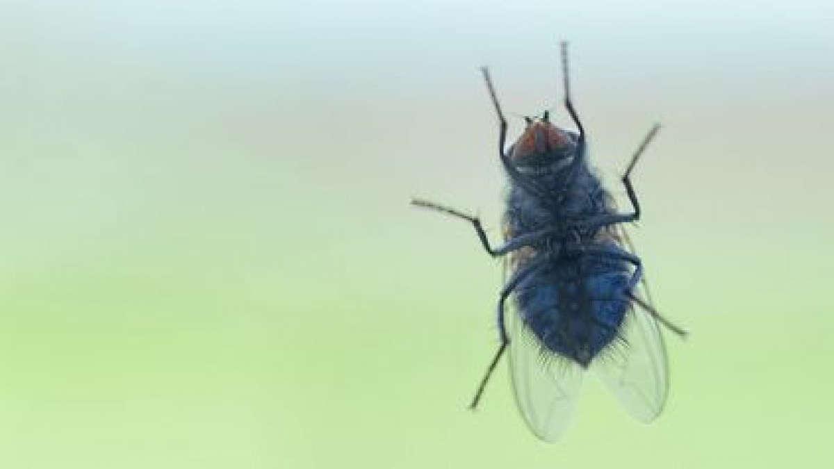 Photo d'illustation : une mouche © ollegn - Fotolia.com