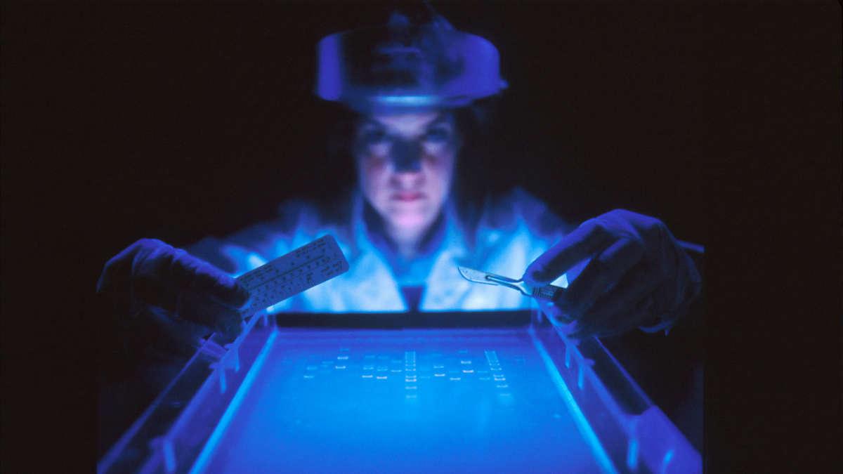 USA : des scientifiques clonent une espèce à partir des gènes d'un animal mort - La Nouvelle Tribune