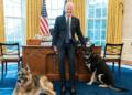 USA : Biden défend son chien après l'incident à la Maison-Blanche