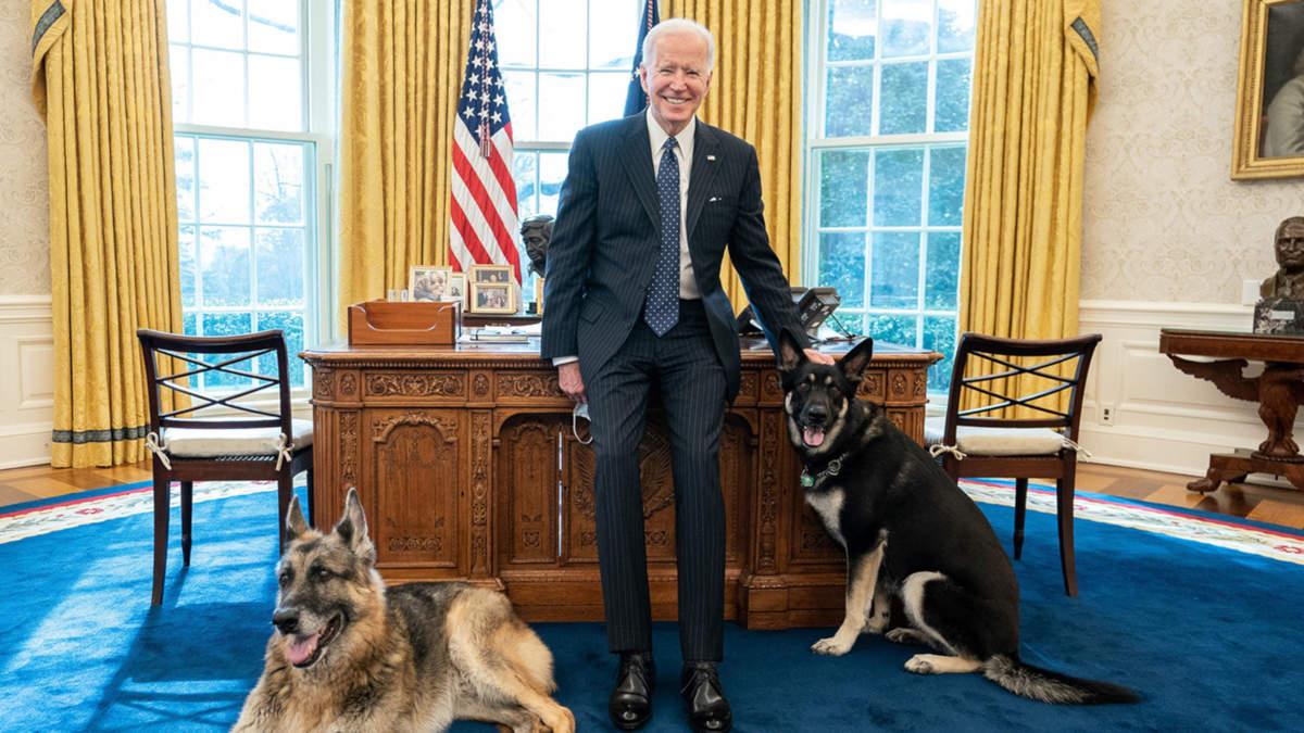 Joe Biden et ses chiens (Maison-Blanche - Photo par Adam Schultz)