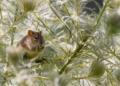 Australie : des millions de souris sèment la terreur dans les fermes (vidéo)