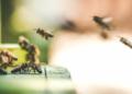 Bénin : Un mariage tourne au drame après des attaques d'abeilles, un décès constaté