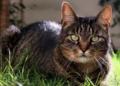 Les chats reconnaissent la voix de leur propriétaire : les détails d'une nouvelle étude